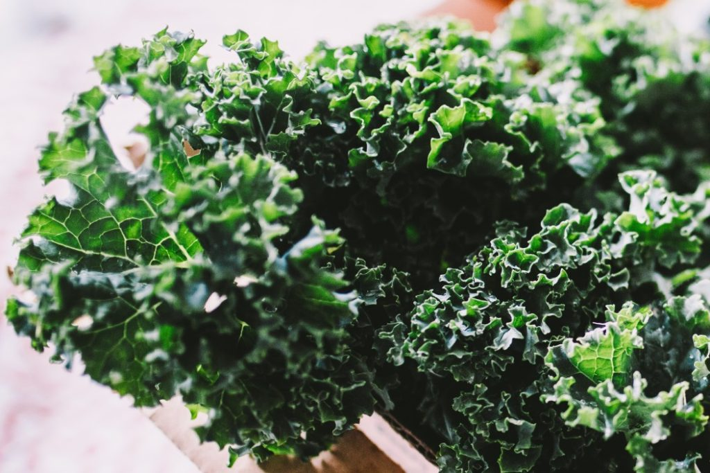 leaf healthy lifestyle healthy smoothie greens vitamin nutrition diet kale superfood t20 eoP3w7