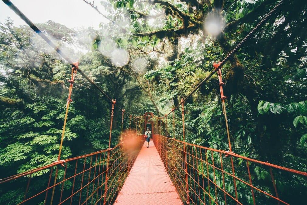 travel bridge red green tourism rainforest costa rica canopy man jungle t20 rRvavl